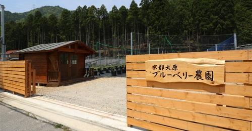 20170609京都大原ブルーベリー農園