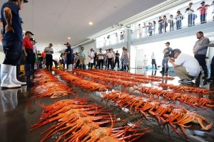 20170905新湊漁港