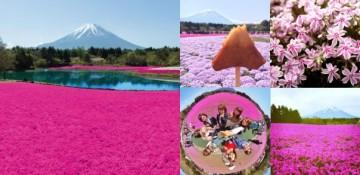 20180213富士芝桜まつり